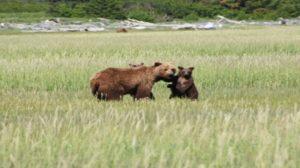 Berenexcursie Katmai national park
